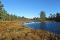 Fjellestad 2013